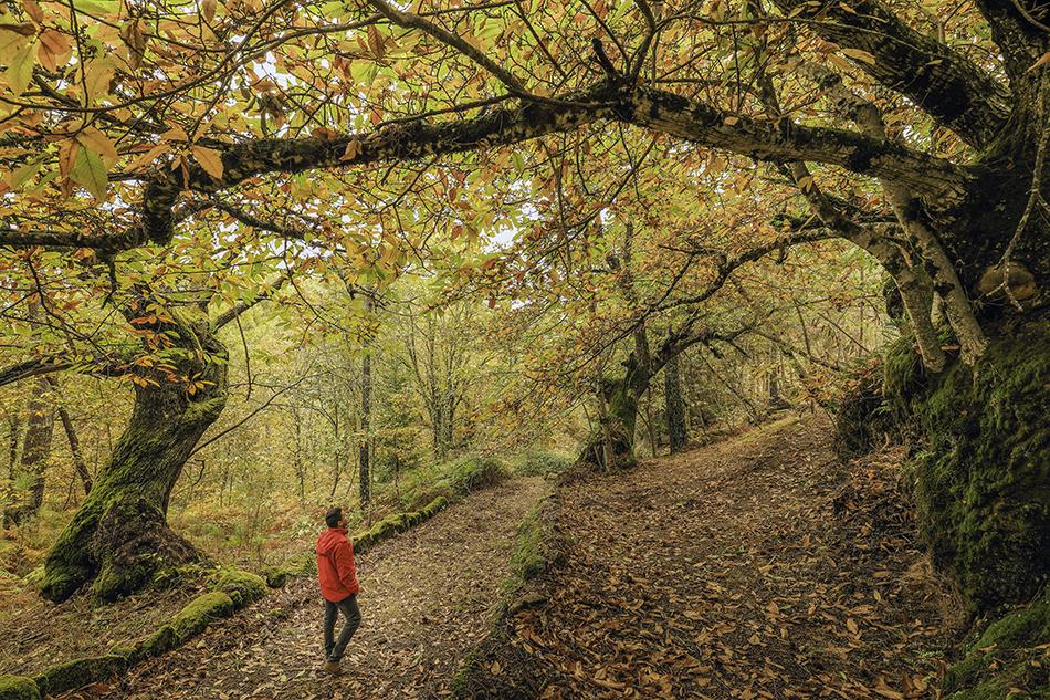 PAisagem de outono na Lapa dos Dinheiros, na Aldeia de Montanha de Seia