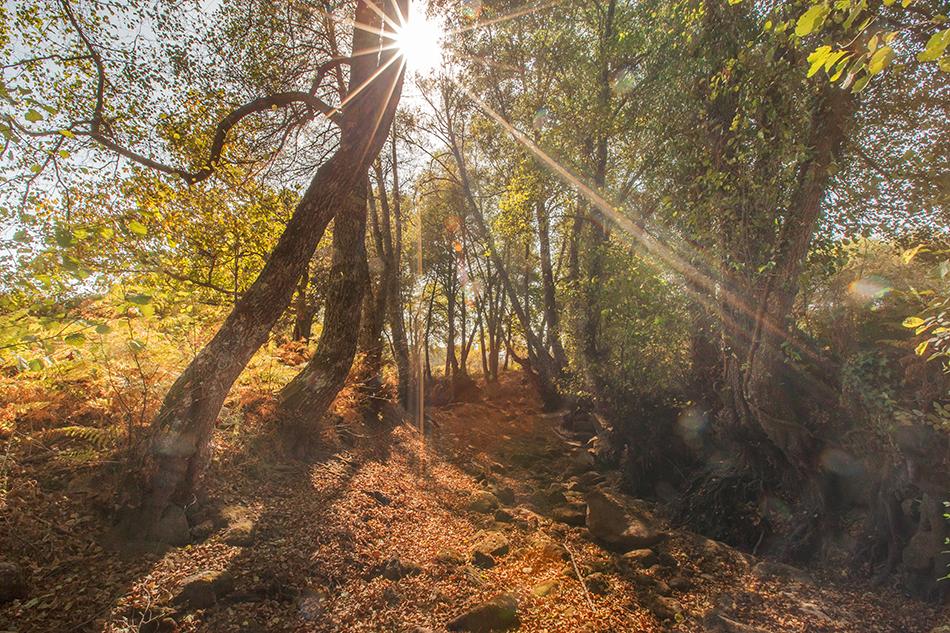 Paisagem de outono na Ribeira de Muxagata, em Fornos de Algodres