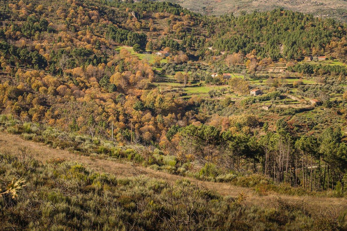 Bosques em Cadafaz, Aldeia de Montanha