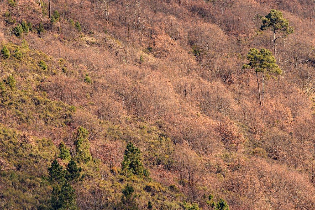 Bosque de Salgueirais, Aldeia de Montanha